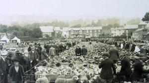 Ewe Sale in 1932 (22,000 sheep changed hands that day)